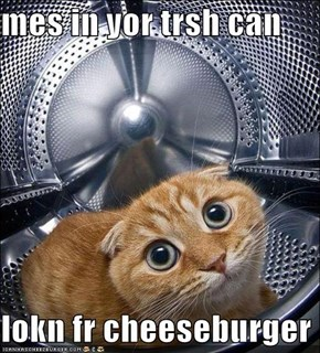 mes in yor trsh can  lokn fr cheeseburger