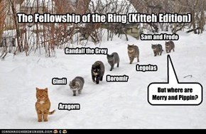 The Fellowship of the Ring (Kitteh Edition)
