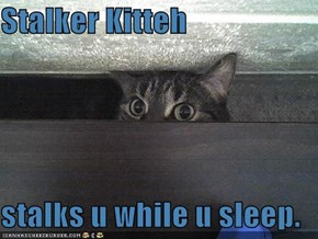 Stalker Kitteh  stalks u while u sleep.