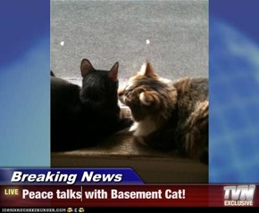Breaking News - Peace talks with Basement Cat!