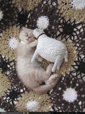 Cyoot Kitteh of teh Day: <strike>Sheep</strike> Sweet Dreemz