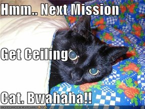 Hmm.. Next Mission Get Ceiling Cat. Bwahaha!!