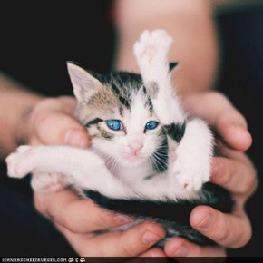 Cyoot Kitteh of teh Day: Iz a Handful!