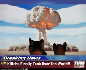 Breaking News - Kittehs Finally Took Over Teh World!!