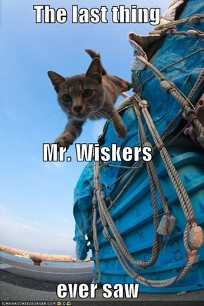 The last thing Mr. Wiskers  ever saw