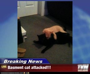 Breaking News - Basment cat attacked!!!
