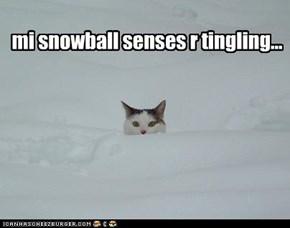 mi snowball senses r tingling...