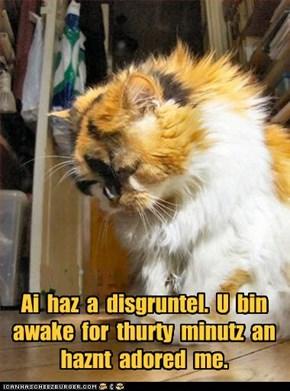 Ai  haz  a  disgruntel.  U  bin awake  for  thurty  minutz  an haznt  adored  me.