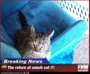 Breaking News - The return of couch cat !!!