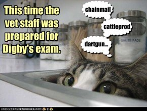 This time the  vet staff was prepared for Digby's exam.