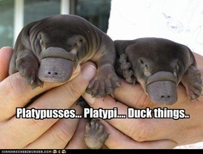 Platypusses... Platypi.... Duck things..