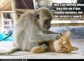 i was a bit worried when they told me it was monkey business, but the service is superb!