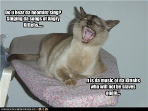 Do u hear da hoominz sing? SInging da songs of Angry Kittehs.....