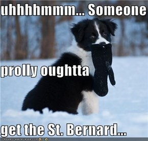 uhhhhmmm... Someone  prolly oughtta  get the St. Bernard...