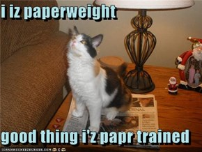 i iz paperweight  good thing i'z papr trained