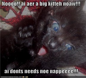 Noooo!! ai aer a big kitteh noaw!!!  ai donts needs noe nappeeee!!!