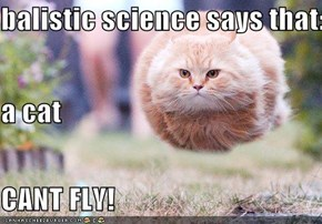 balistic science says that: a cat CANT FLY!