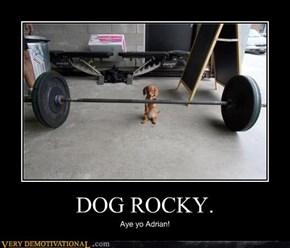 DOG ROCKY.