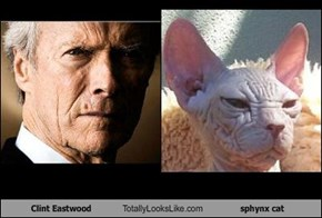 Clint Eastwood Totally Looks Like sphynx cat