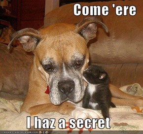 Come 'ere  I haz a secret