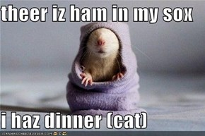 theer iz ham in my sox  i haz dinner (cat)