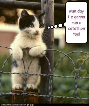 spectator kitteh