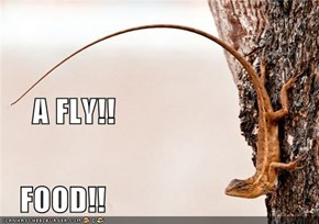A FLY!!    FOOD!!