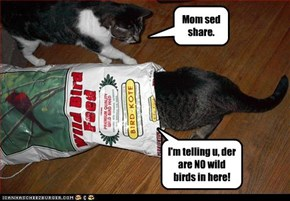 I'm telling u, der are NO wild birds in here!