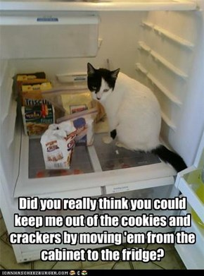 Did you really think you could keep me out of the cookies and crackers by moving 'em from the cabinet to the fridge?