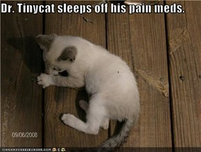 Dr. Tinycat sleeps off his pain meds.