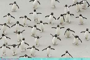 Acting Like Animals: Penguin Flash Mob!