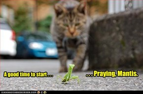 A Good Time To Start Praying, Mantis