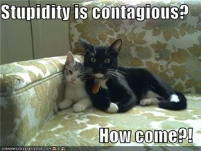 Stupidity is contagious?  How come?!
