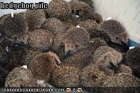 hedgehog pile