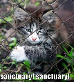 sanctuary! sanctuary!