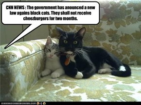CNN NEWS : The government has anounced a new law agains black cats. They shall not receive cheezburgers for two months.