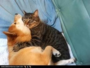 Kittehs R Owr Friends: Hugz r nice... but ur chokin meh...