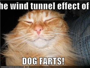 the wind tunnel effect of  DOG FARTS!