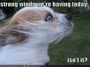 strong winds we're having today  isn't it?