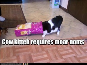 Cow kitteh requires moar noms