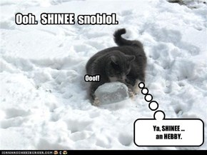 Icyblols is SHINEE.