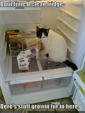 Bout time U clean fridge-  Dere's stuff growin fur in here.