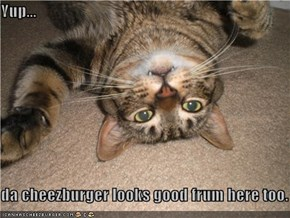 Yup...  da cheezburger looks good frum here too.