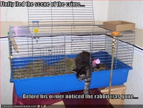 Fluffy fled the scene of the crime....  Before his owner noticed the rabbit was gone....