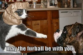 may the furball be with you
