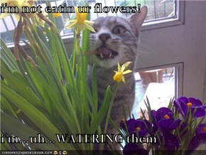 i'm not eatin ur flowers!  i'm...uh...WATERING them