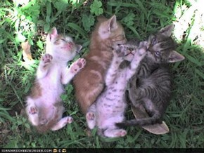 Cyoot Kittehs of teh Day: Nap in teh Shayd on a Hawt Summerz Day