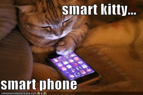 smart kitty...  smart phone