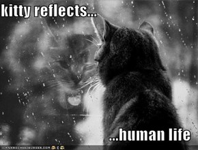 kitty reflects...  ...human life