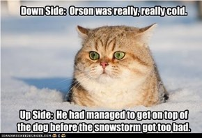 Down Side:  Orson was really, really cold.